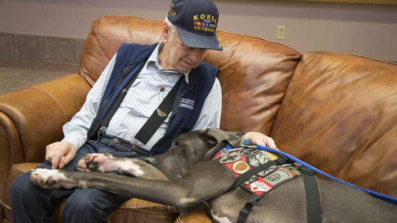 Bandit visits with a veteran.