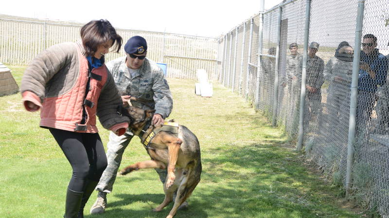 """Bosch"" star Amy Aquino participates in a Military Working Dog demonstration during a USO tour to Edwards Air Force Base in California on April 10."