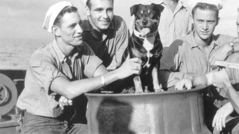 Sinbad, the U.S. Coast Guard mascot in World War II, aboard the Campbell.  Photo Credit U.S. Coast Guard Historian's Office.