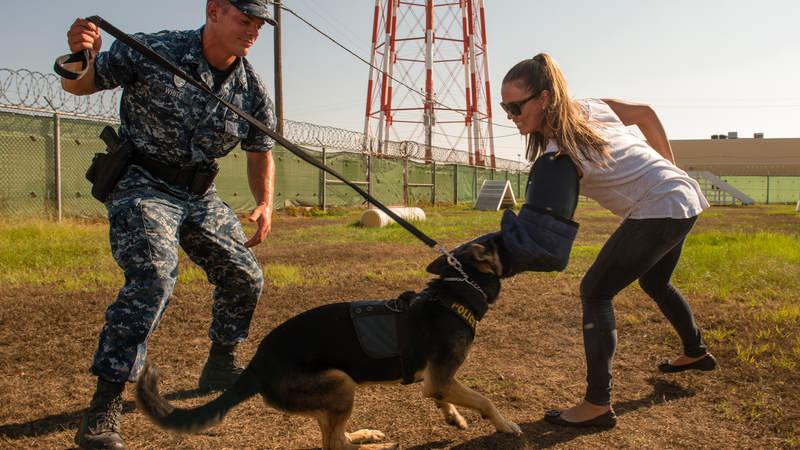 U.S. Olympic swimmer Natalie Coughlin participates in a military training dog demonstration at Naval Station Rota during her USO tour to Spain in 2013.